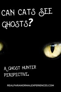 Can Cats See Ghosts