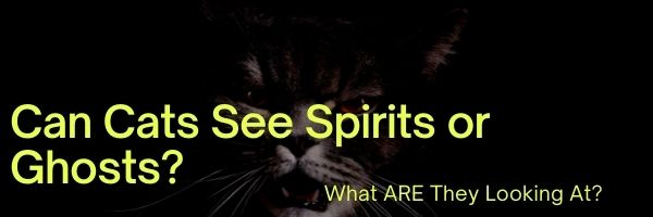 Can Cats See Spirits or Ghosts
