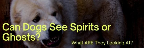 Can Dogs See Spirits or Ghosts