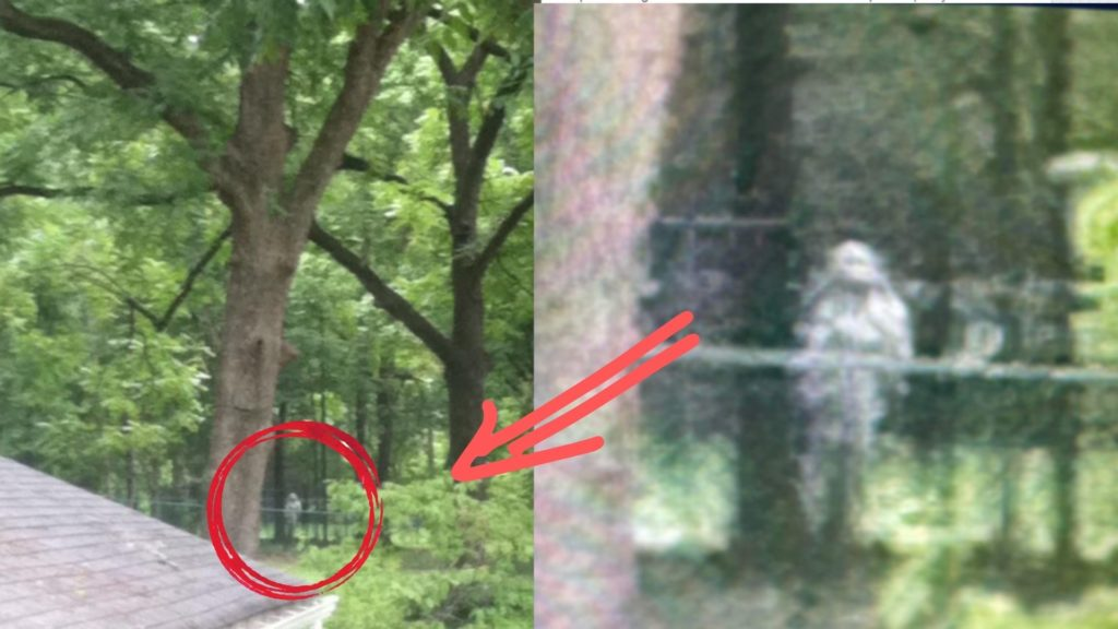 Ghost Caught on Motion camera